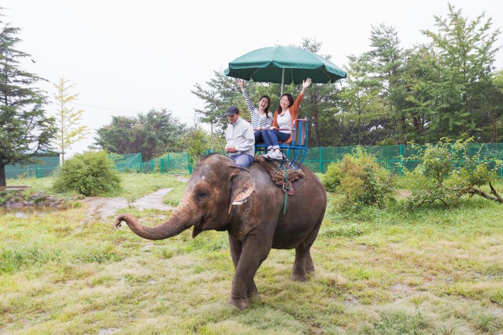 safaripark-110 - コピー