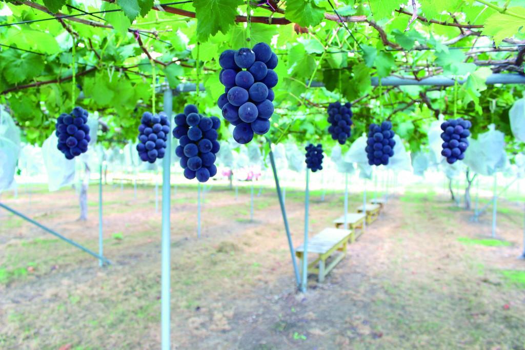 あづま果樹園 (2)