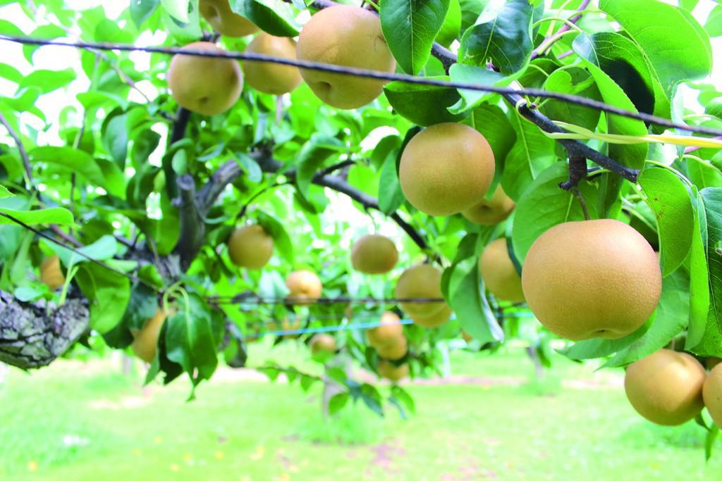 あんざい果樹園 (1)