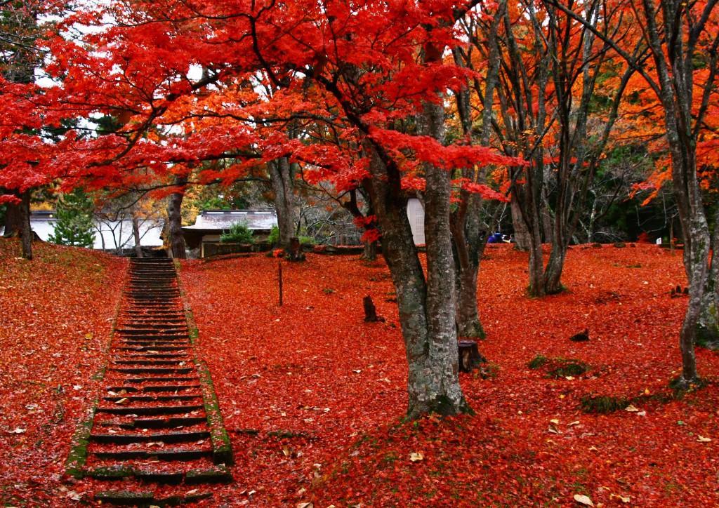 土津神社(石段)