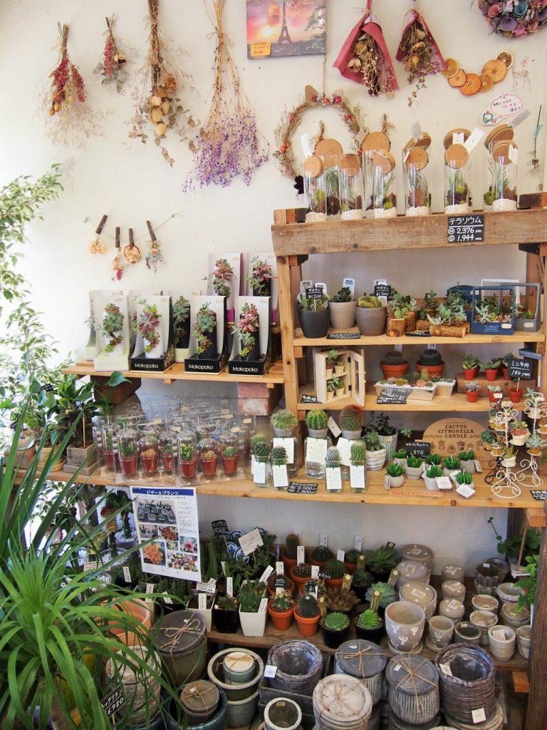 (16)店内_多肉植物コーナー